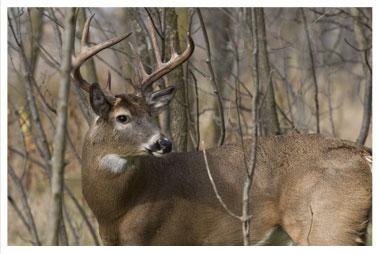 deer hunting in rib lake