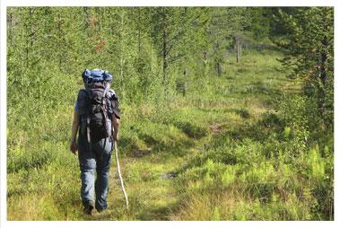 Hiking Trails in Rib Lake